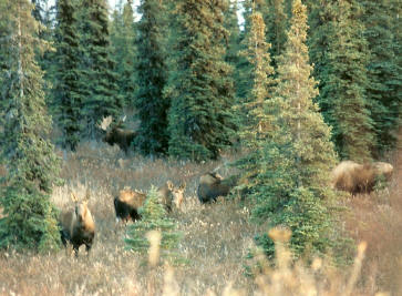 Calling Moose