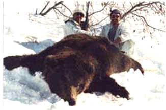 Alaska Bear Hunts - Hunt Specials